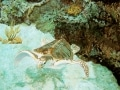 8-Roeing_Sea-Turtle