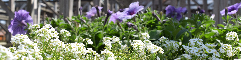 flower-slider
