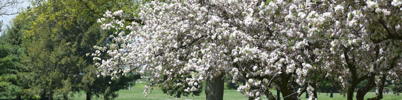 spring-tree-slider